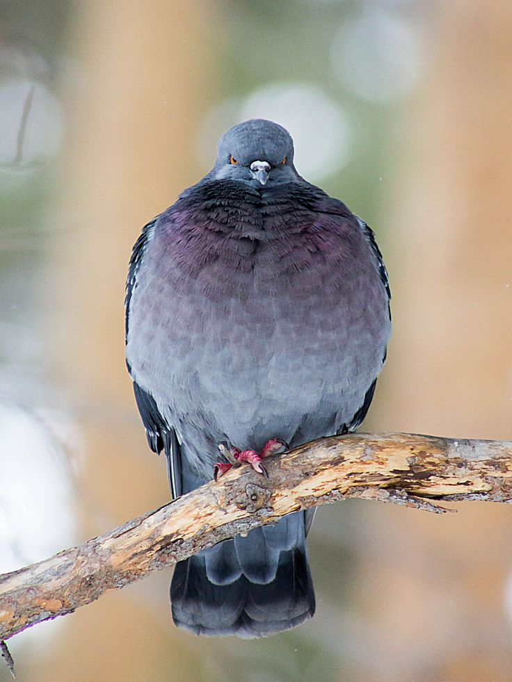 голубь by Angelina Lapteva on 500px