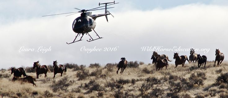 """Post-truth (part 2) We began our conversation on """"post-truth"""" as advocates for wild horses and """"the land they now stand"""" last week. The publishers of the renowned Oxford Dic…"""