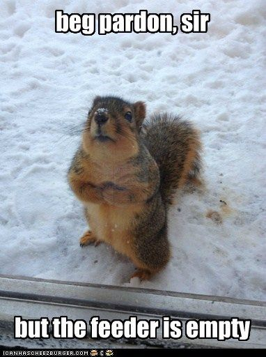 Awww!!!  Well we don't have snow but we do have hundreds of squirrels where I live.  And they do beg like this too when their feeders are empty.