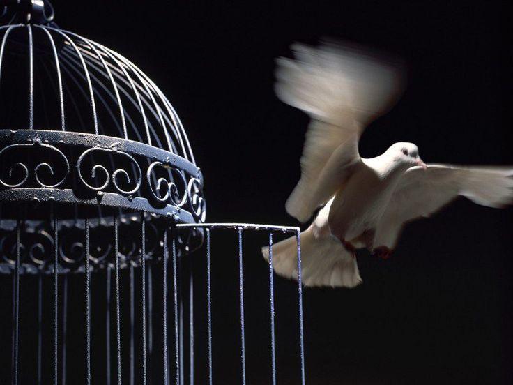 La libertad es el tesoro más preciado que posee el ser humano y esto lo sabía no solo Jean-Paul Sartre, sino que es el principio fundamental que rige a toda persona en cualquier parte del mundo; porque el simple hecho de ser libre y no estar condicionado por ninguna diferencia de carácter socio-cultural es fundamental. Ya que para hacer efectivo el pleno goce de ésta máxima humana, debemos comprometernos a luchar cada día contra viento y marea, por no ser hostigados a raíz de nuestras…