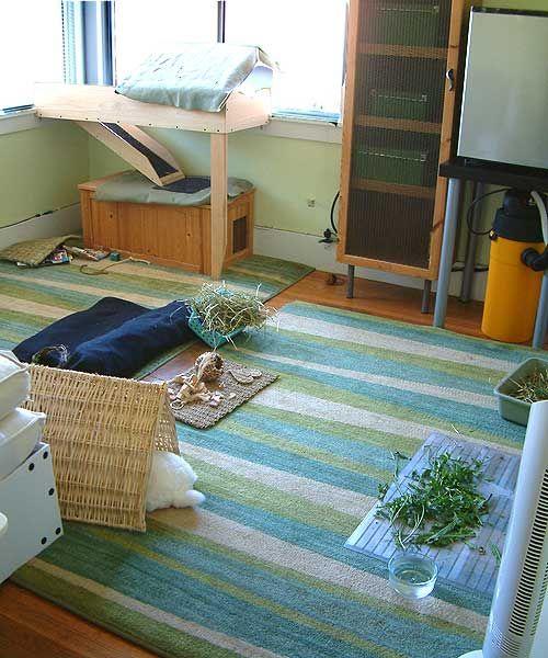 Bunny Room with Bunny Window Lounge box over Hidey House Home
