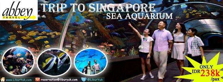 Yuk saksikan keindahan dah kemegahan kehidupan bawah laut di #Sea #Aquarium #Singapore. Booking paketnya sekarang juga dan dapatkan diskon spesialnya!  Dapatkan Spesial Paket tersebut dari #LiburYuk http://liburyuk.com/bookitem/110/2014-01-23/SEA-AQUARIUM #abbeytravel #jalan2 #holiday