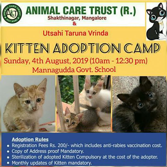 Free Arv Kitten Adoption Camp To Be Held On August 4 Mangaluru An Exclusive Kitten Adoption Camp And Free Anti Rabies News Kitten Adoption Kitten Adoption