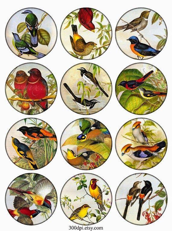 Imprimolandia: Etiquetas vintage de pájaros Vintage birds tag