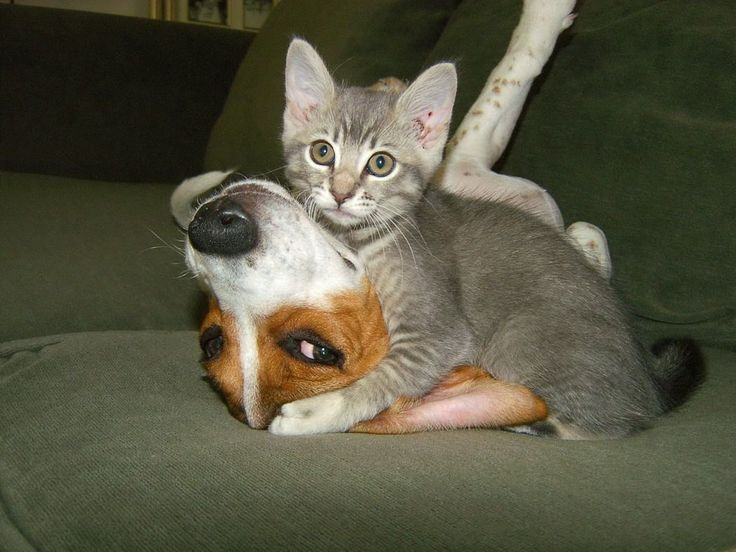funny+animal+pictures funny animals cat dog funny