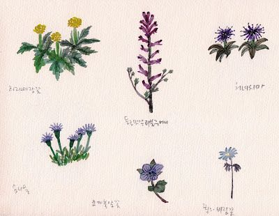 FLOWER FLOWER: 야생화 그려보기(practice watercolor with wild flowers/lat...