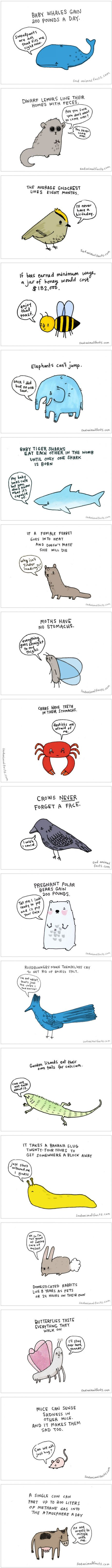 Sad Animal Facts (by Brooke Barker)                                                                                                                                                                                 More
