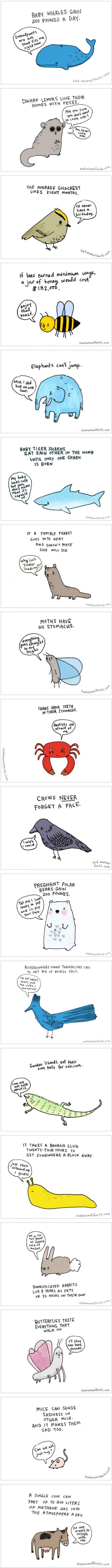 Sad Animal Facts (by Brooke Barker)                                                                                                                                                                                 More