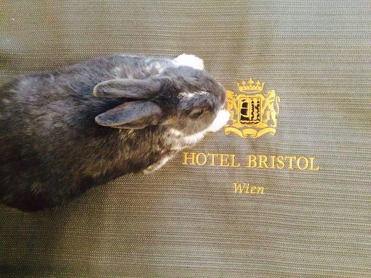 Tierischer Urlaub mit Hund, Katze und auch Hasen! Hier im tierfreundlichen 5 Sterne Hotel in Wien (c) Hotel Bristol   #urlaubmithund  #urlaubmithaustier #holidayswithpets #wien #austria #österreich www.tierischer-urlaub.com
