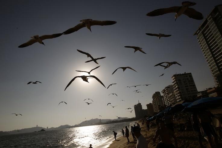 Günün Fotoğrafı: 05.03.2013  Acapulco plajında günbatımı. Sahilde yürüyenlere martılar eşlik ediyor. (Henry Romero/ Meksika- REUTERS)
