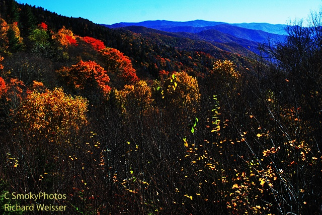 smoky mountain nc leaf peak | Great Smoky Mountains National Park is THE place to see fall foliage.