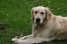 Mijn hond mee op vakantie naar Duitsland? Waar moet ik rekening mee houden?  http://www.wereldpagina.nl/index.php/Mijn_hond_mee_op_vakantie_naar_Duitsland%3F#Waar_moet_ik_rekening_mee_houden_als_ik_mijn_huisdier_wil_meenemen_naar_Duitsland.3F