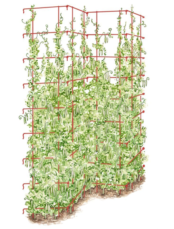 Tall Expandable Pea Trellis Buy From Gardener S Supply If
