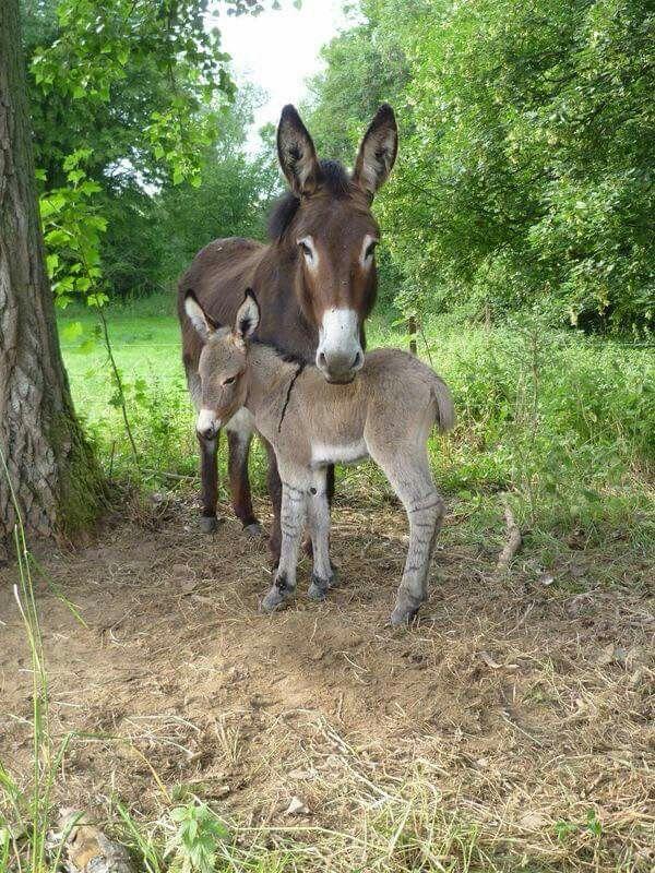 Mama and baby burro.                                                       …