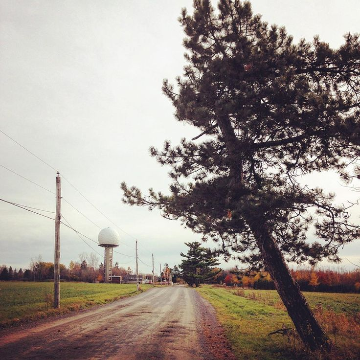 Arboretum Morgan.  #arbre#tree#vegetation#nature#rurex#suburbex#suburb#rsa_trees#arboretum#arboretummorgan #paysage#landscape#architecture#dome#route#road#mtl#montreal#igersmontreal#montréaljetaime#livemontreal#themainmtl#weatisland#a44westisland#rsa_rural