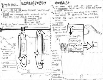 pond ecosystem coloring pages | Aquatic Ecosystems Coloring Sheet | Biology and other ...