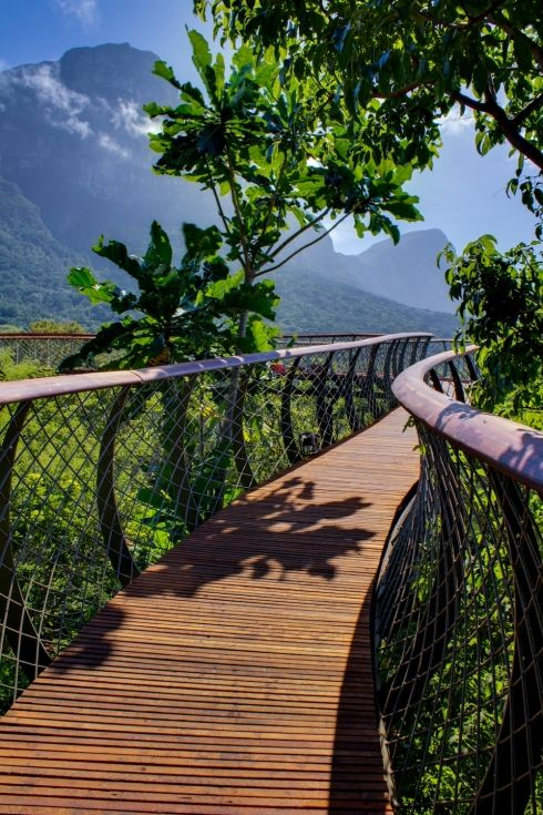 The Boomslang canopy walkway at Kirstenbosch Botanical Garden, Cape Town. Is now completed and open to the public.