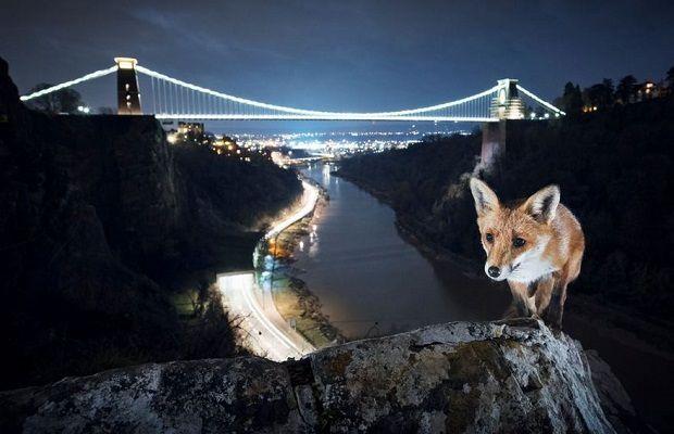 Avrupa Kentlerinde Vahşi Yaşamı Fotoğraflayan 23 Karede Zamanın Müthiş Sentezi