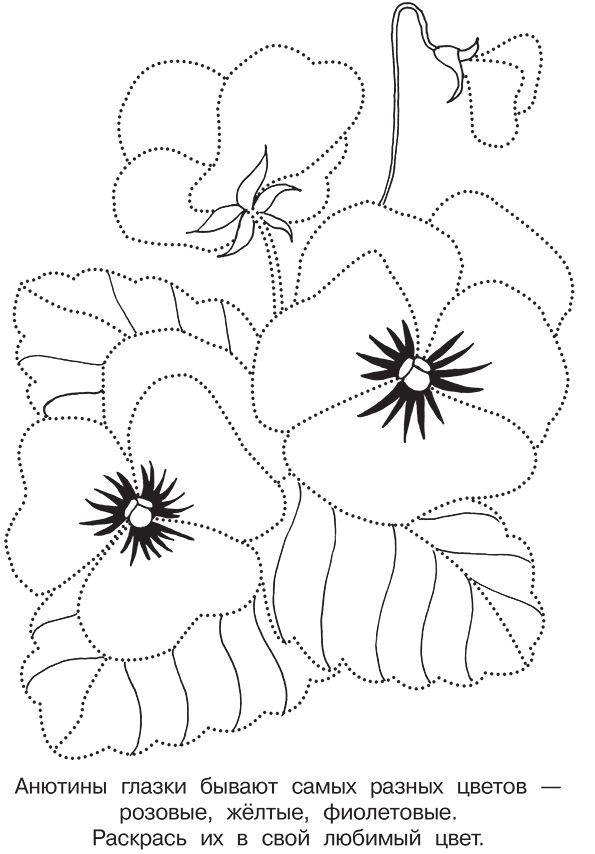 раскраска цветок Анютины глазки соедини по точкам и раскрась