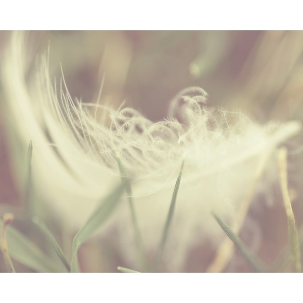 feather photography indie photography indie wall decor ethereal cream... ($19) ❤ liked on Polyvore