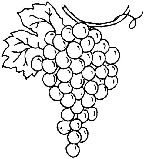 Bunch of grapes coloring page to use as an embroidery pattern.