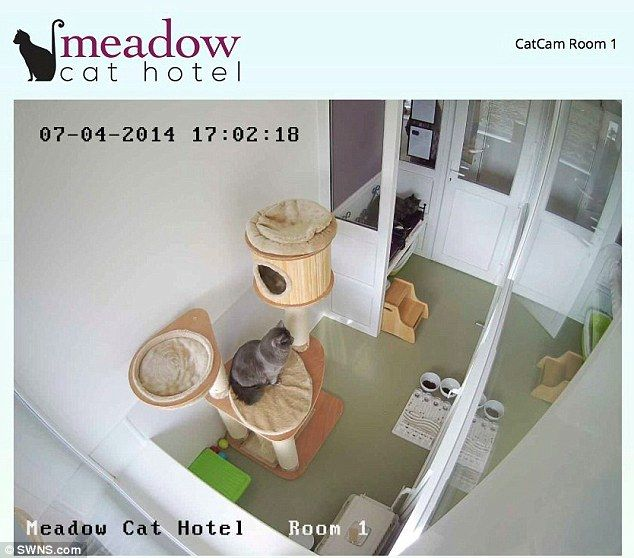 Keeping a cat's eye on things: A feline resident is caught on camera. Meadow Cat Hotel.