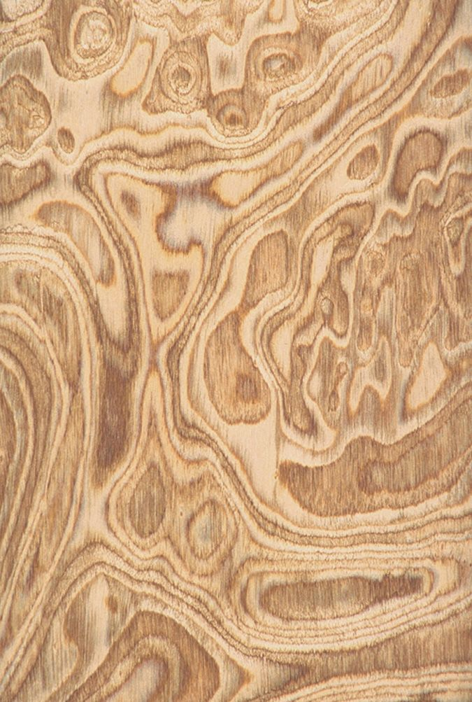 olive burl wood  Easy Woodworking Projects in 2019  Wood
