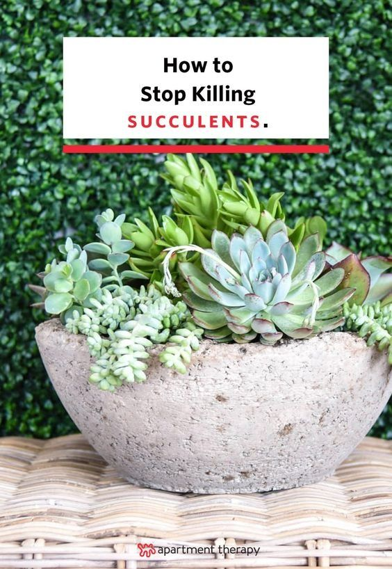 Of course, there's more to caring for plants than finding a good location, so Sage Market + Design also provided us some of their best tips for caring for your succulent garden.