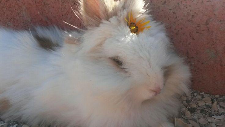 My little bunny lion head♥