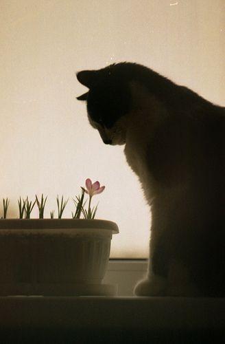 ecologicCat Art, Shadows Cat, Kitty Cat, Pots Flower, Black Cat, Cat Lady, Animal, Pets Cat, Cat Flower