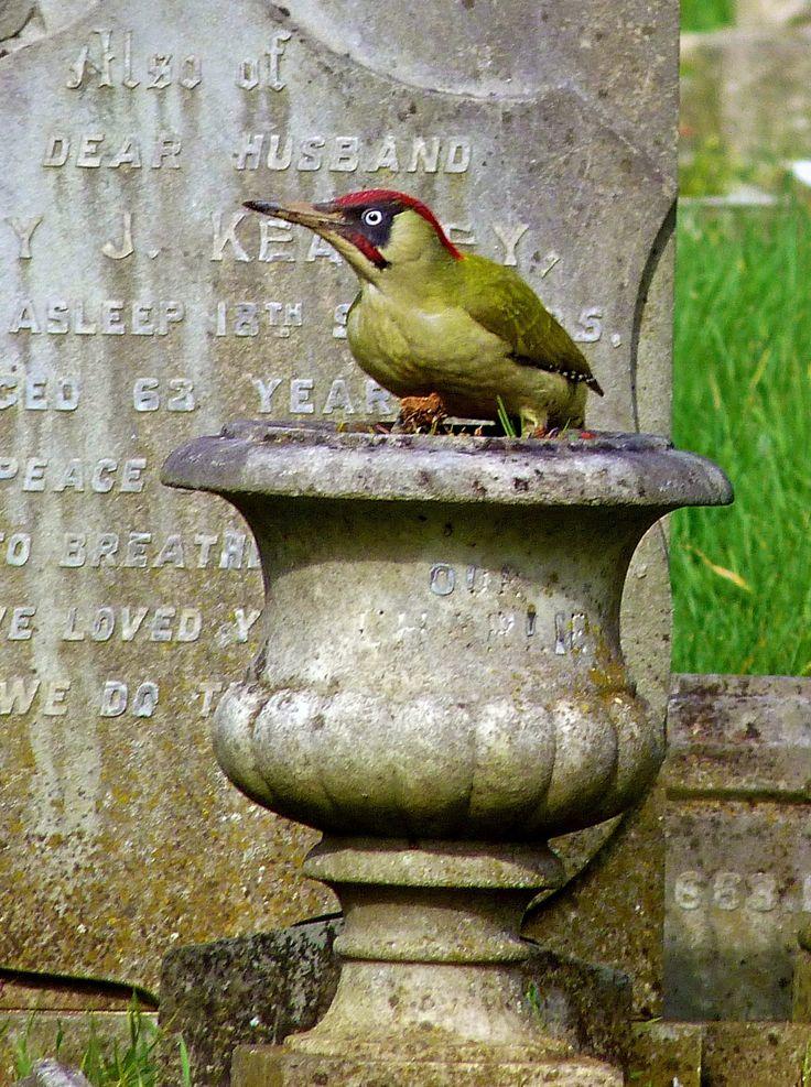 Tottenham Green Woodpecker!!
