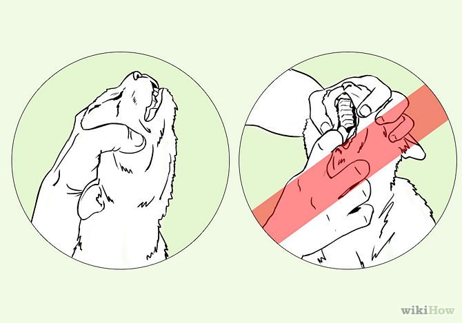 How to Save a Choking Cat: 8 Steps - wikiHow