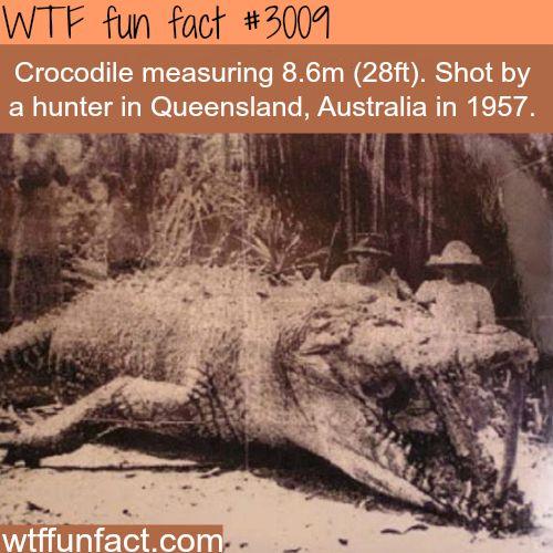 Huge 8 meter Crocodile shot in Australia -  WTF fun facts
