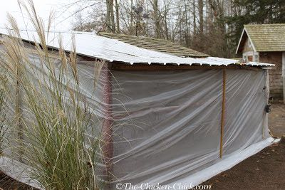 Surviving Winter with Chicken: CREATE WIND-BREAKS: Covering run walls with construction grade plastic sheeting or tarps serves several purposes: it provides the flock with a warmer run by keeping rain, wind and snow out during the day, and it keeps the coop warmer and draft-free at night. Furring strips should be nailed or screwed to the structure to ensure that the plastic remains in place.