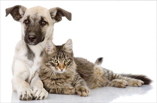 Pour nos animaux de compagnie