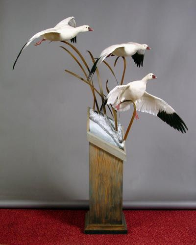 goose taxidermy - Google Search