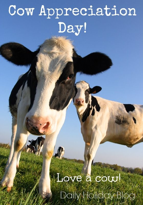 July 12 is Cow Appreciation Day!  Show up at Chick-Fil-A dressed as a cow and get free food!