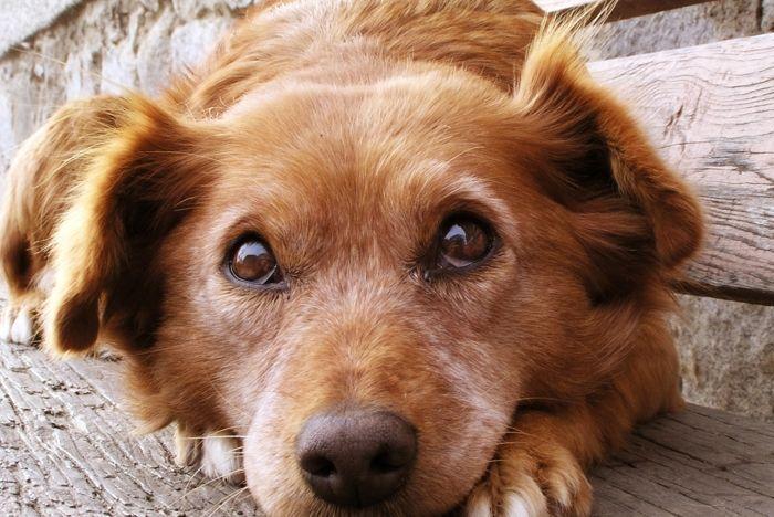 Ya sea folclore o de hecho, muchos de nosotros nos gustaría creer que nuestros perros pueden detectar presencias inexplicables o invisibles(sobrenatural), guiados por un sexto sentido canino. Es emocionante y reconfortante, pensar que su perro es sensible a un familiar o amigo fallecido. Pero la evidencia de la percepción extrasensorial …