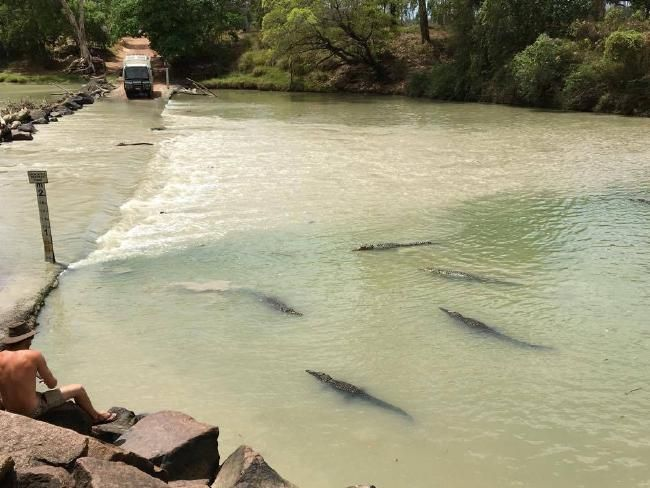Swarms of saltwater crocodiles gather at Cahill's Crossing in Arnhem Land.