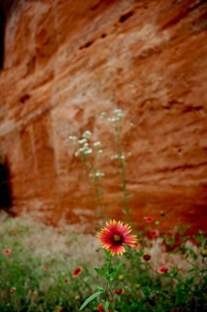 Red Rock Canyon State Park in central Oklahoma is known for its red canyon walls and nature trails dotted with wild flowers.