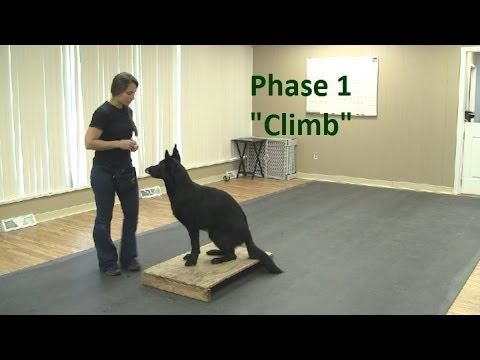 "How to Train a Dog to ""Climb"" (K9-1.com) - YouTube"