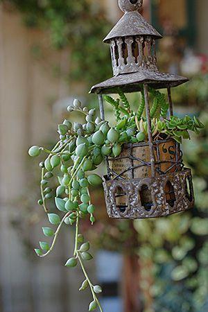 Hanging Succulents.: Gardens Ideas, String Of Pearls, Secret Gardens, Hanging Plants, Unique Planters For Succulents, Hanging Succulents, Hanging Planters, Planters Ideas, Succulents Ideas