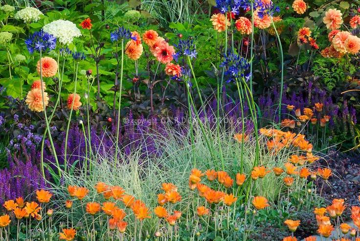 39 best pond plants images on pinterest ornamental for Ornamental garden ponds