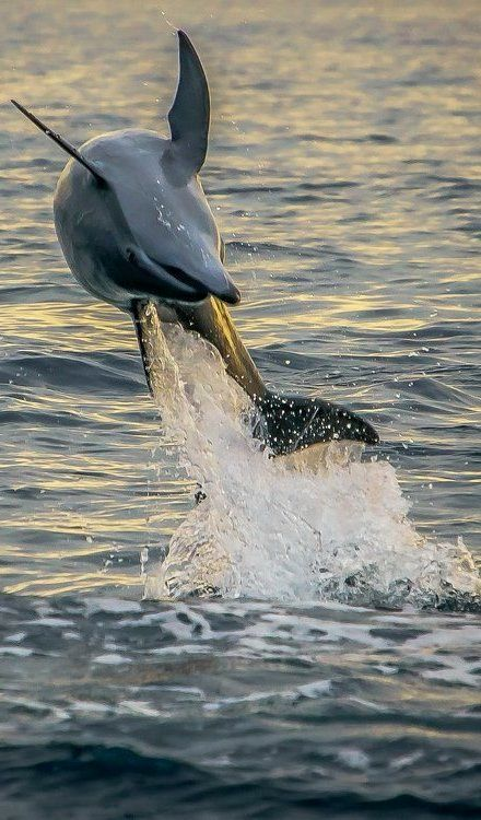 Dolphin jumping and playing in the water --