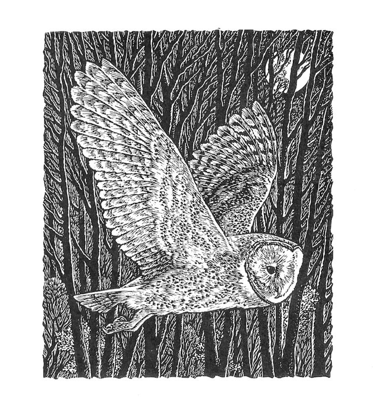 Silent as a hunting owl #BeetlesBugsBirds #SueScullard