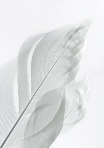 Have hope, never give up, know that you are loved. White feathers on white background!