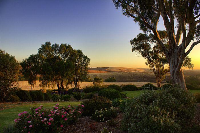 Das Barossa Valley ist das bekannteste Weinanbaugebiet Australiens und befindet sich etwa eine Autostunde von Adelaide entfernt. #südaustralien #australien #barossavalley
