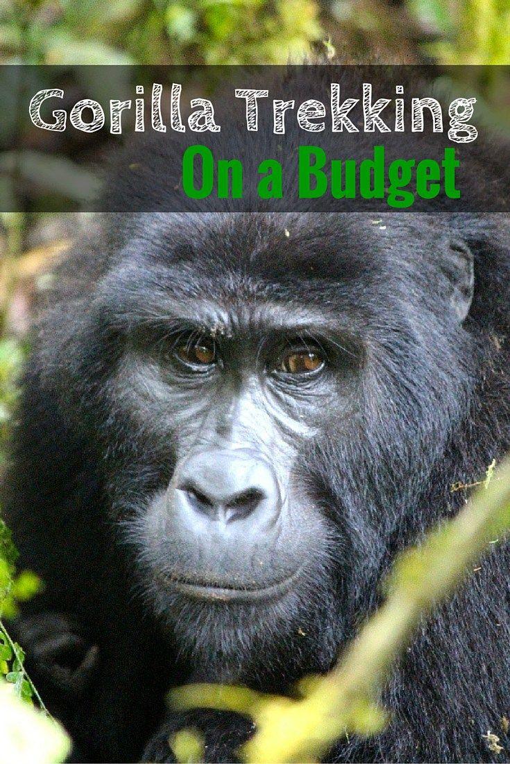 Gorilla trekking on a budget Pinterest