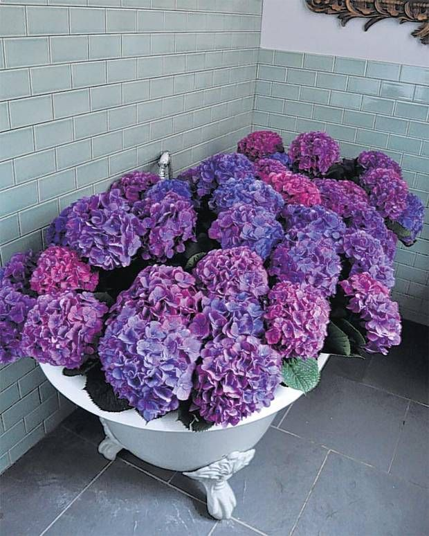 343 Best Images About Oh How I Love Hydrangeas X On