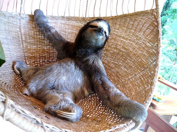 Best Sweet Sloths Images On Pinterest Baby Sloth Sloths And - 5 month old baby and sloth are the most unlikely of best friends
